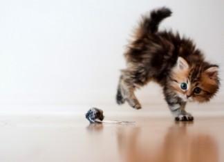 семинар для владельцев котят